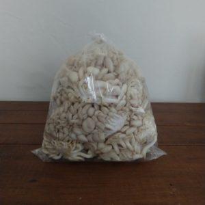 Cogumelo shimeji (quilo) – disponível únicamente em pacote de quilo