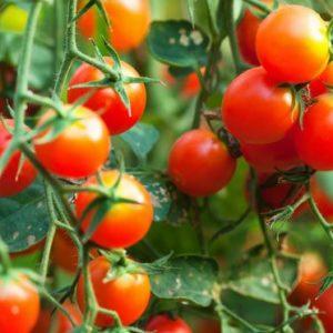 Tomate cereja (pacote com 250g)